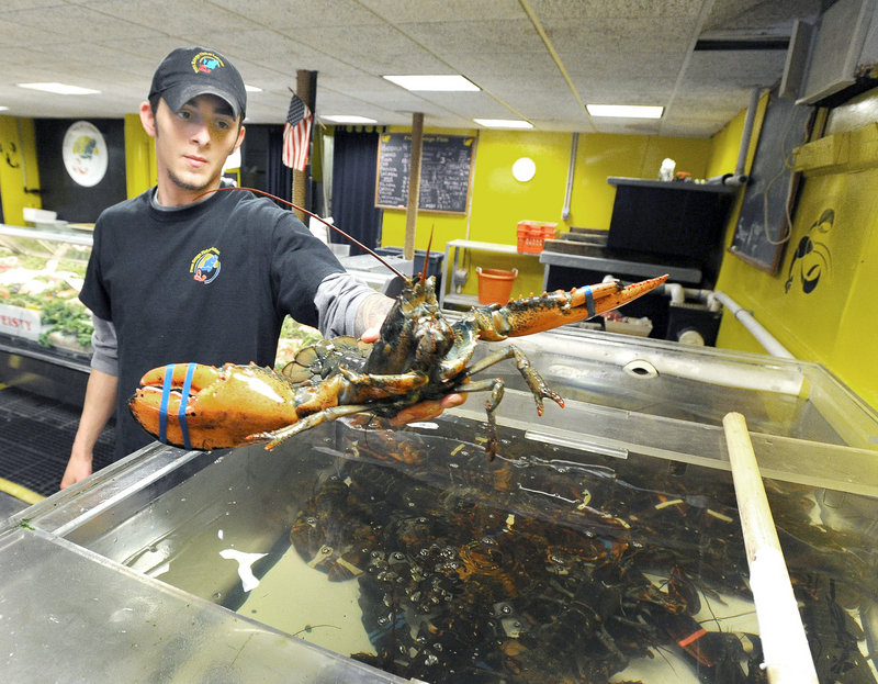 "Ethan Zwaan sorts lobsters at Free Range Fish and Lobster, where retail prices remain at last fall's levels. ""We are getting ready to tap a really big season,"" owner Joe Ray says."