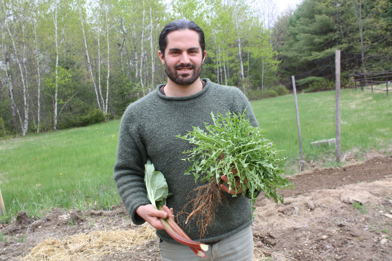 Chef Frank Giglio harvests dandelion greens and rhubarb from his East Waterboro garden. On Thursday, he will begin the Maine Real Food Project in Portland, a series of cooking classes that will emphasize local, nutrient-dense foods.