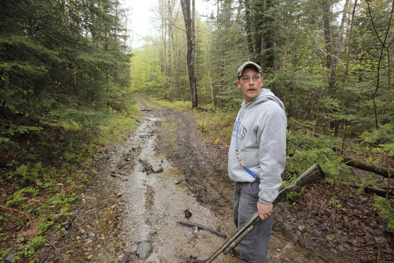 Mike Corson listens to baying bloodhounds in the woods of Thorndike on May 21 as he hunts coyotes with the Knox Ridge Coyote Hunters, a loose-knit club.