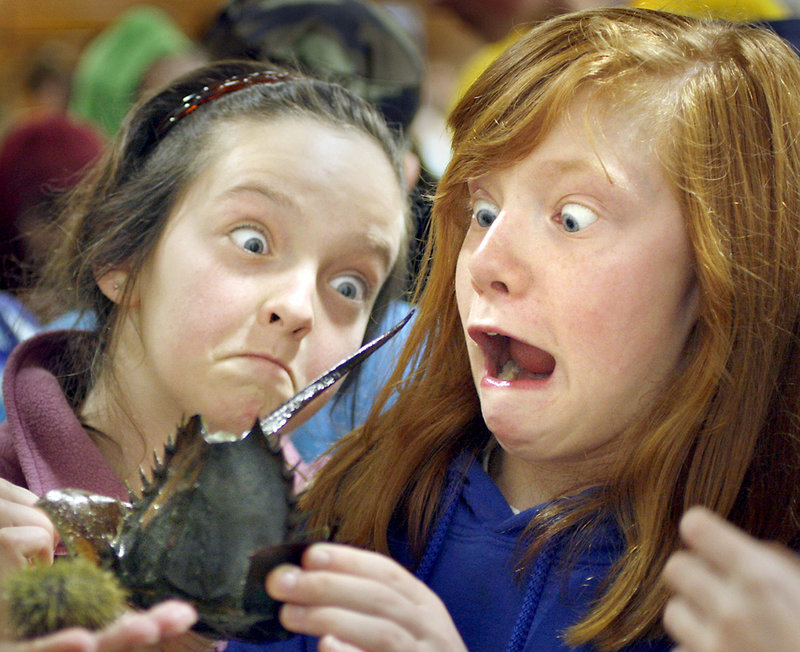 Cassie Guy, left, and Katelyn Roberts, both fifth-graders at Shapleigh Middle School in Kittery, react as a horseshoe crab wiggles its tail at the Explore a Marine Tidepool exhibition during the 16th annual Southern Maine Children's Water Festival at USM's Portland campus on May 20. Some 650 fourth-, fifth- and sixth-grade students and teachers from15 local schools learned about wetland ecosystems and clean water.