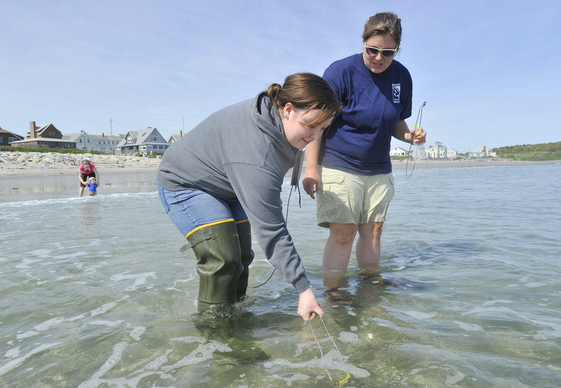 Scarborough High student Becca Carifio, left, collects a water sample with instructor Sarah Mosley Wednesday afternoon at Higgins Beach in Scarborough, as part of the Maine Healthy Beaches program to monitor water quality weekly on public beaches.