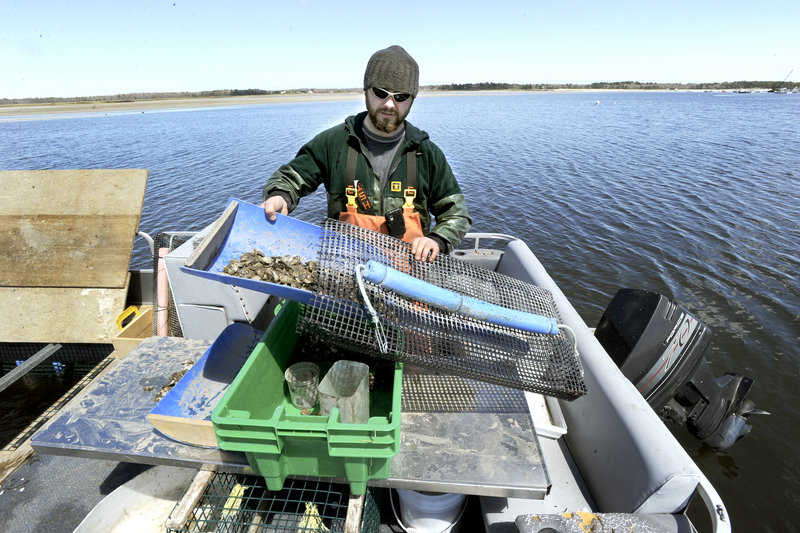 Nate Perry fills an oyster bag that will be placed in the Scarborough River to allow the oysters to mature. It takes about three years to grow oyster seeds – about 2 millimeters big – to market size.