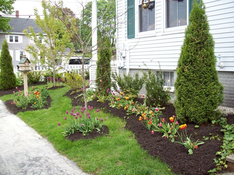 Plantings along one side of the home.