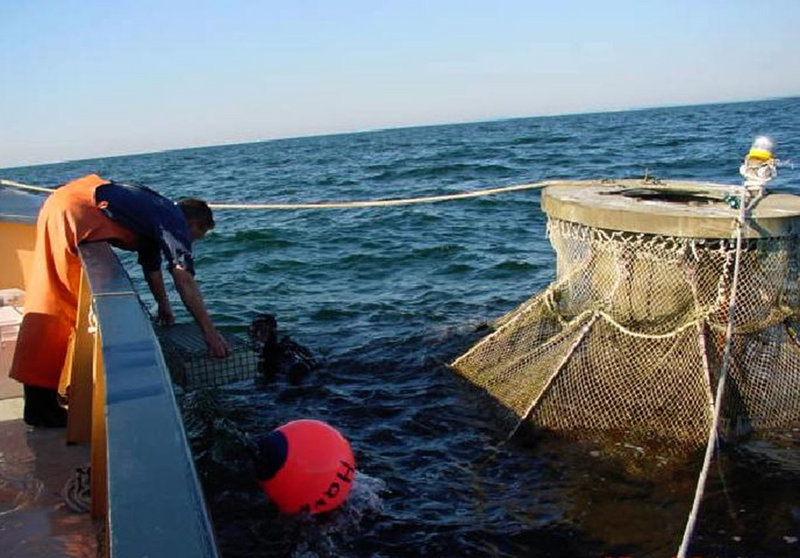 A crewman passes a transfer cage of young Atlantic halibut to a diver for stocking into an offshore fish cage off the New Hampshire coast in 2002. Currently there are no fish farms in federal waters, only in the 3-mile band of state waters. Proposed federal guidelines will take another year to finalize.