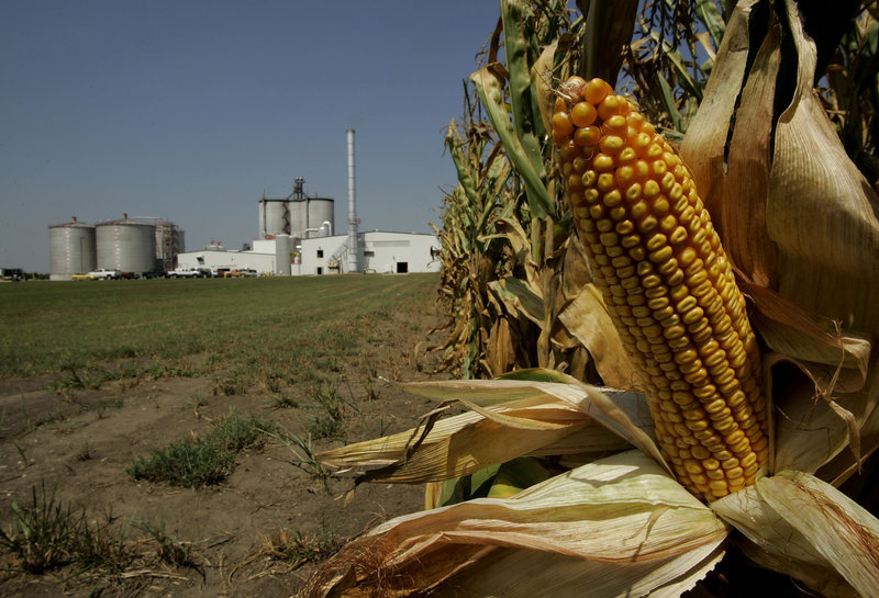 "Corn grows near the Mid-Missourri Energy ethanol plant near Malta Bend, Mo., in this 2006 photo. On Thursday the U.S. Senate, in a bipartisan 73-27 vote, repealed a tax credit for ethanol producers. ""The best way for ethanol to survive is to stand on its own two feet,"" said Sen. Tom Coburn, R-Okla."