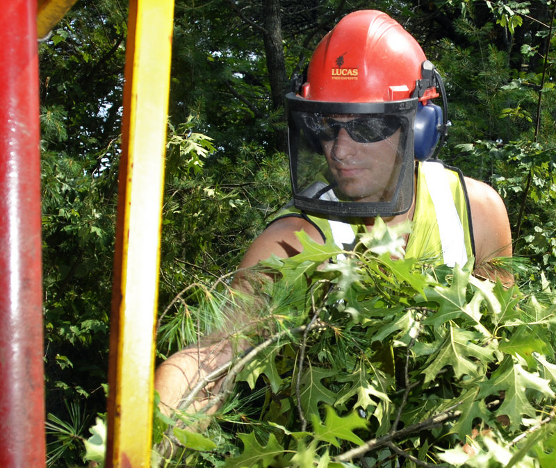 Andrew Sloat of Westbrook, a Lucas Tree Experts foreman, feeds downed trees into a chipper while working on a job site in Windham. The tree care industry has been buoyed in recent years by new federal rules imposing fines on electric utilities that don't follow line maintenance plans.