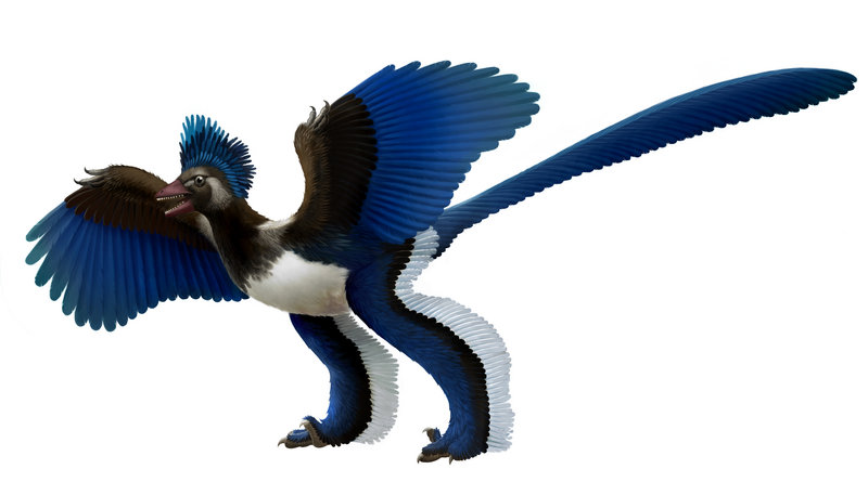 This artist's rendition shows what the Chinese Academy of Sciences is calling Xiaotingia zhengi.