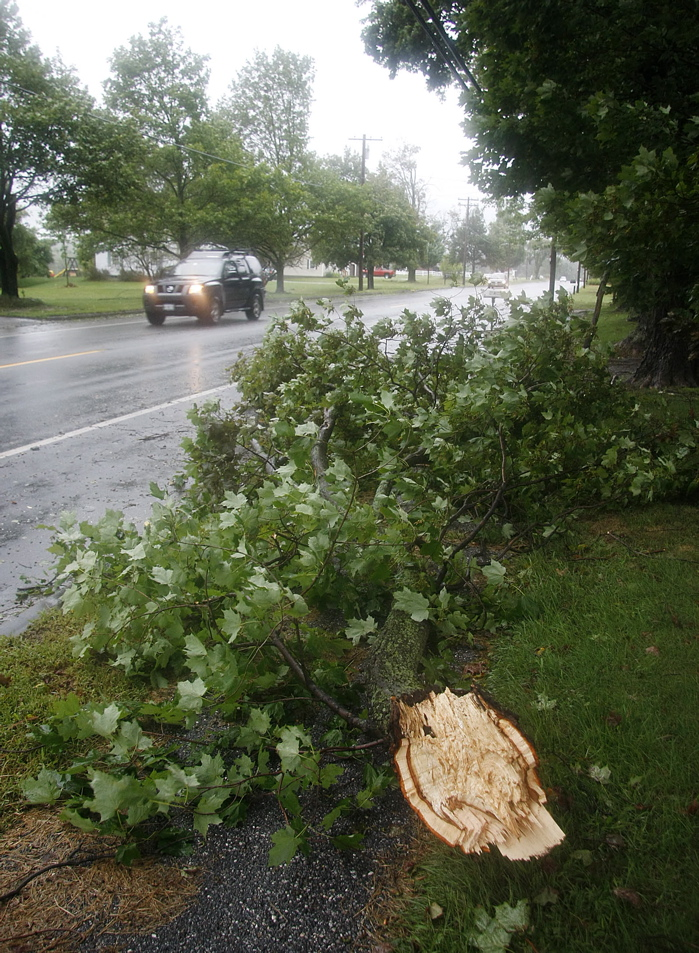 A large tree limb rests at the side of Route 26 in Gray today during Tropical Storm Irene.