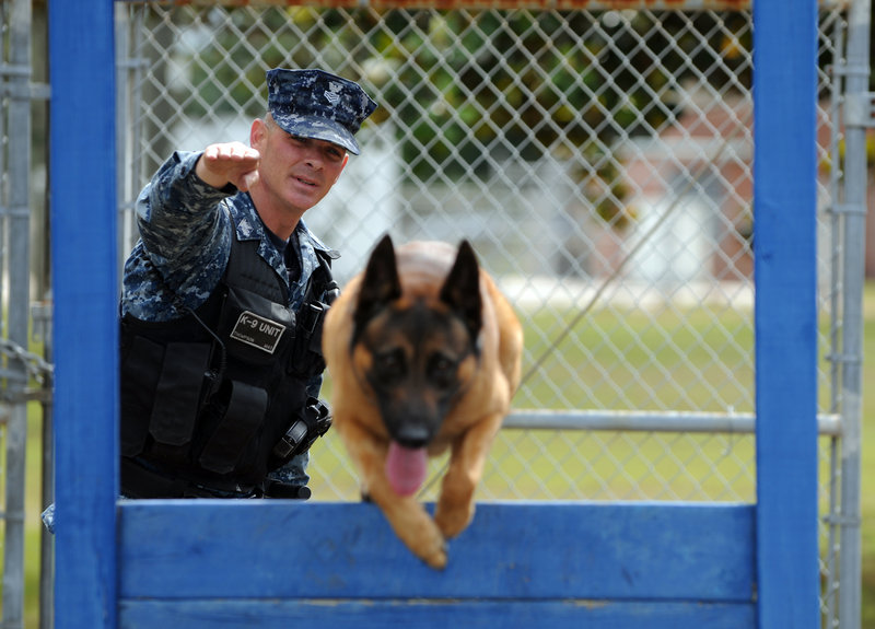 Master at Arms Kris Thompson of Saginaw, Mich., puts Marco, a Belgian Malinois, through a training exercise in Pensacola, Fla. Thompson, the kennel master at Naval Air Station Pensacola, has used the Navy Credentialing Opportunities On-Line program to help him prepare for civilian life after serving in the Navy.