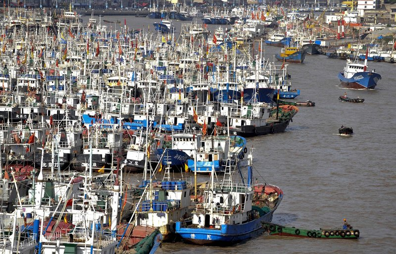 Fishing boats are moored in the Shenjiamen Harbor in Zhoushan in east China's Zhejiang province pior to the alert to prepare for Typhoon Muifa.