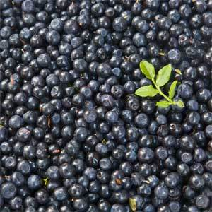 It's blueberry season, which means it's blueberry festival season. They're happening in Kennebunk and Winslow on Saturday and in Rangeley on Aug. 18.