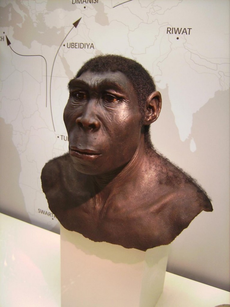 This photo shows a reconstruction of Homo erectus at Germany's Westfälische Museum in Munster.