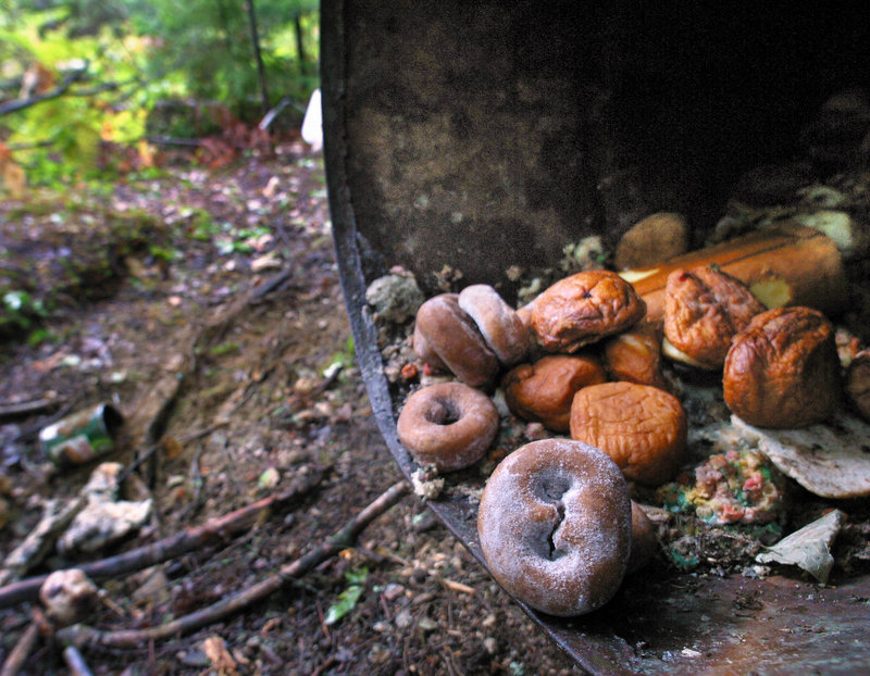 Doughnuts and other pastries are among the treats that hunters use to attract bears.