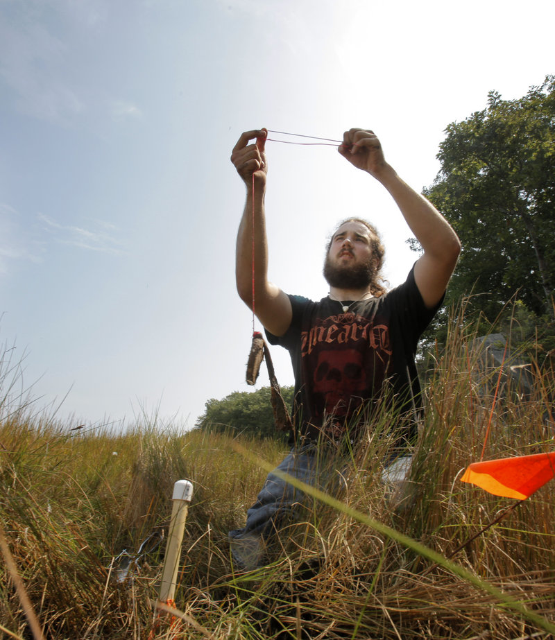 UNE senior Cory French collects a resin bag along the bank of the Saco River in Biddeford Thursday. The bags absorb nitrogen to determine the area s suitability for plant growth.