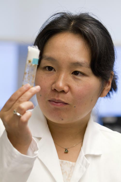 Yukiko Yamashita, 39, is a University of Michigan Medical School assistant professor and developmental biologist studying stem cell division.