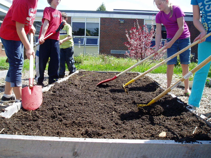 In Scarborough, Wentworth Intermediate School students ready a raised bed.