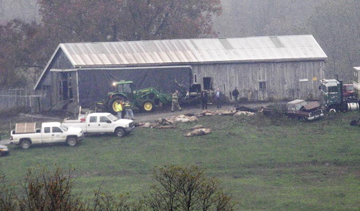 Investigators walk around a barn as carcasses lay on the ground at The Muskingum County Animal Farm in Zanesville, Ohio, on Wednesday.