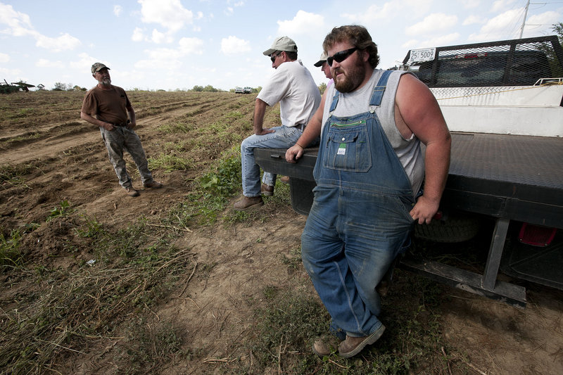 Potato farmer Casey Smith, right, looks at a nearly empty potato field that needs cultivating on his father's farm in Cullman, Ala. Smith typically hires about 25 laborers to help bring in his crop. However, only five workers showed up last Thursday, the day that Alabama's stringent immigration law took effect.