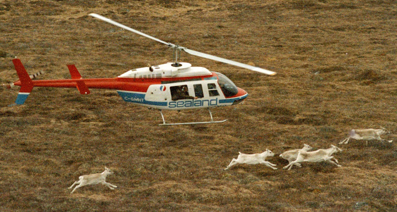 A helicopter with a wildlife official aboard chases caribou in Newfoundland, Canada, on Dec. 5, 1986. The flight was part of an ill-fated project to shoot caribou with a tranquilizer gun and relocate them to Maine to restock the state's once-thriving population. Scenes like this one are included in a new book by former Maine fish and game spokesman Paul Fournier.