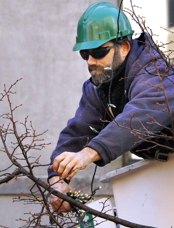 Mike Grant of Portland's Forestry Department hangs Christmas lights in the trees in Monument Square on Monday.