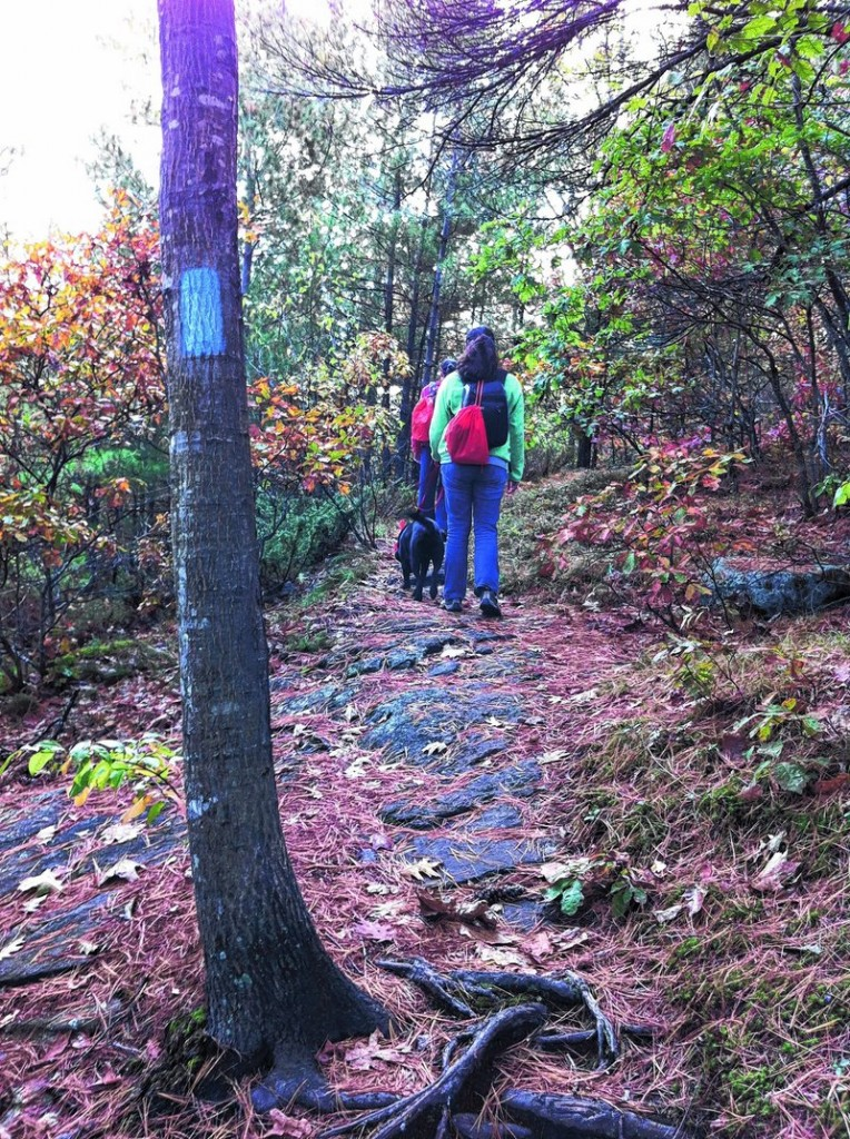 The Burnt Meadow Mountain trail is well-marked with blue blazes.