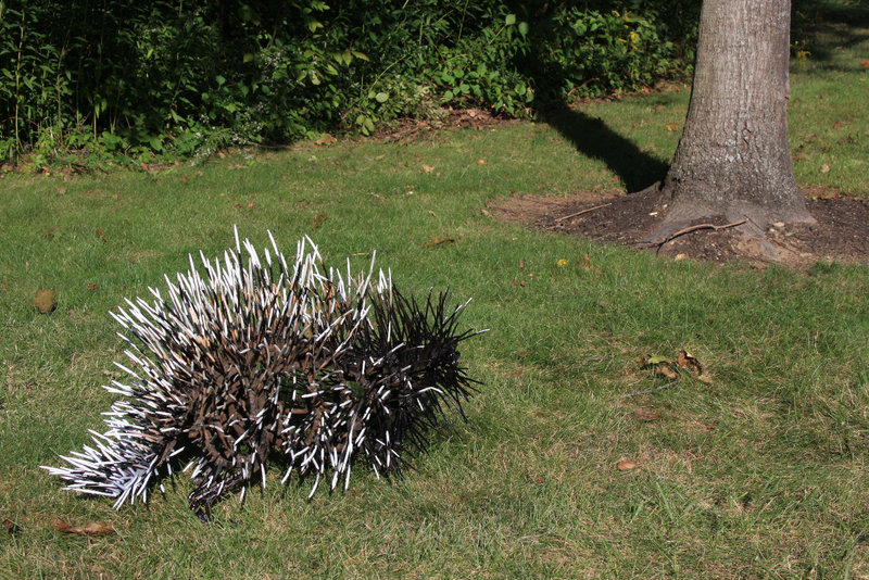 The porcupine of Wendy Klemperer's