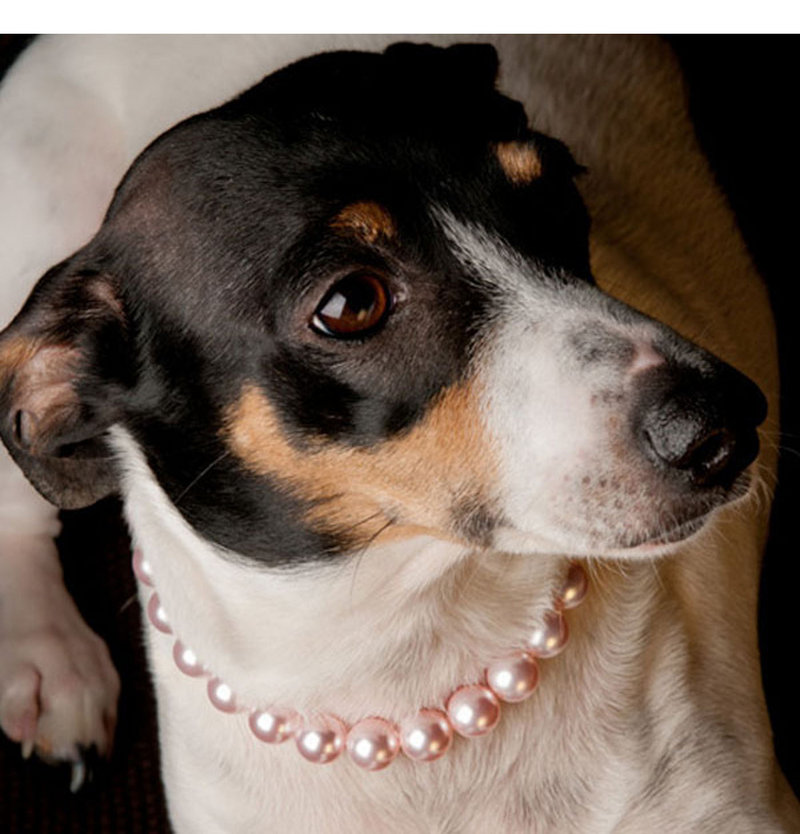 Maybe a necklace is a little too upscale for your pet, but if you're like most Americans, you'll budget a little extra to buy Rover or Boots something to open on Christmas morning.