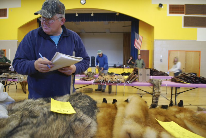 Jerry Braley, a fur buyer from Kenduskeag, decides which pelts to buy at the Palmyra Fur Auction. Braley, a trapper for nearly 50 years who has a wealth of knowledge, hopes that trapping will continue to be passed down to Maine youth, as it has been for generations.
