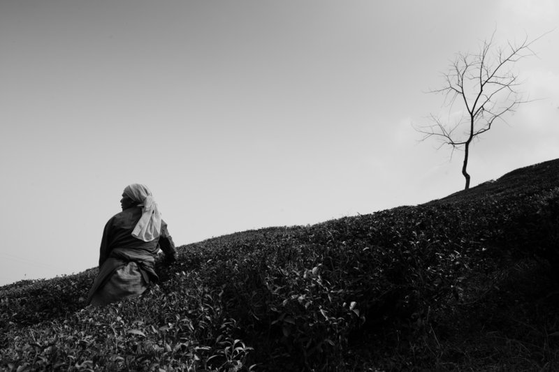 Brendan Bullock's shot of a woman in a tea field in Darjeeling, India.