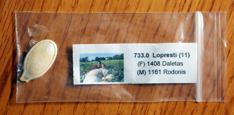 Seeds are packaged and carefully labeled. Growers may see a winner somewhere and want to check to see if they have the same seed.