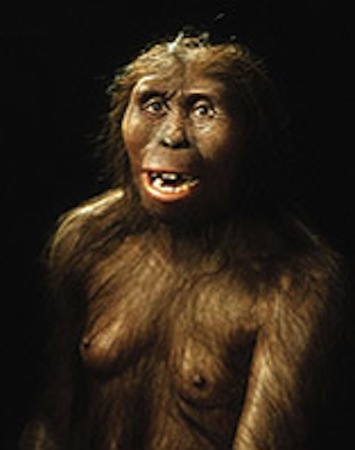 This artist rendering shows Lucy, the fossil remains of a female hominid who lived 3.2 million years ago in Ethiopia.