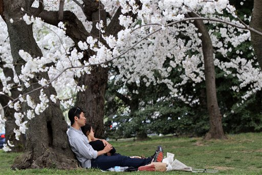 A couple enjoys the blossoms on Monday in an area of the tidal basin where some of the oldest cherry blossom trees in Washington stand.