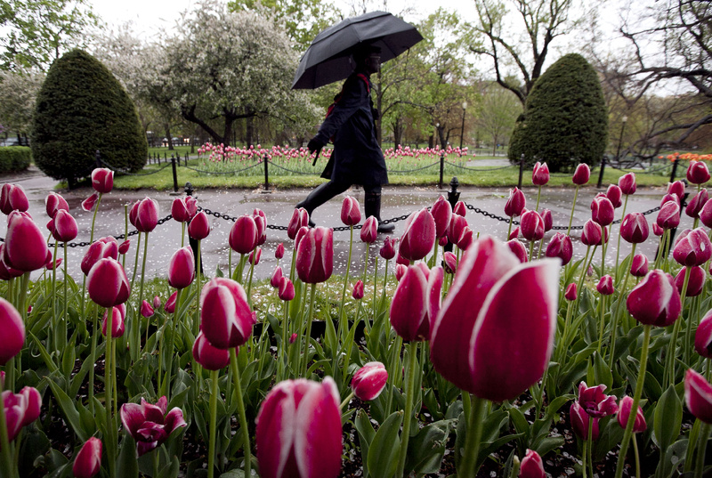 A pedestrian strolls through a wet Boston Public Garden on Sunday. The National Weather Service has said that areas around Boston are likely to see 2 to 3 1/2 inches of rain from a spring storm passing through the area Sunday and today.