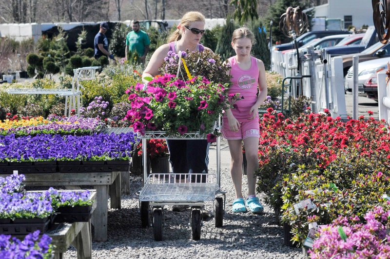 Catherine Saltz of Westbrook and her daughter Elizabeth, 11, look over the plants while shopping at Broadway Gardens. Phil Roberts, the owner, said he was spending a lot of time trying to convince shoppers to stick to hardy pansies right now.
