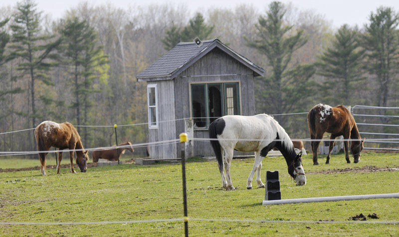 Horses graze in a field Monday at Whistlin' Willows Farm in Gorham. Forty to 45 horses remain at the farm after an outbreak of botulism killed 23 last month.