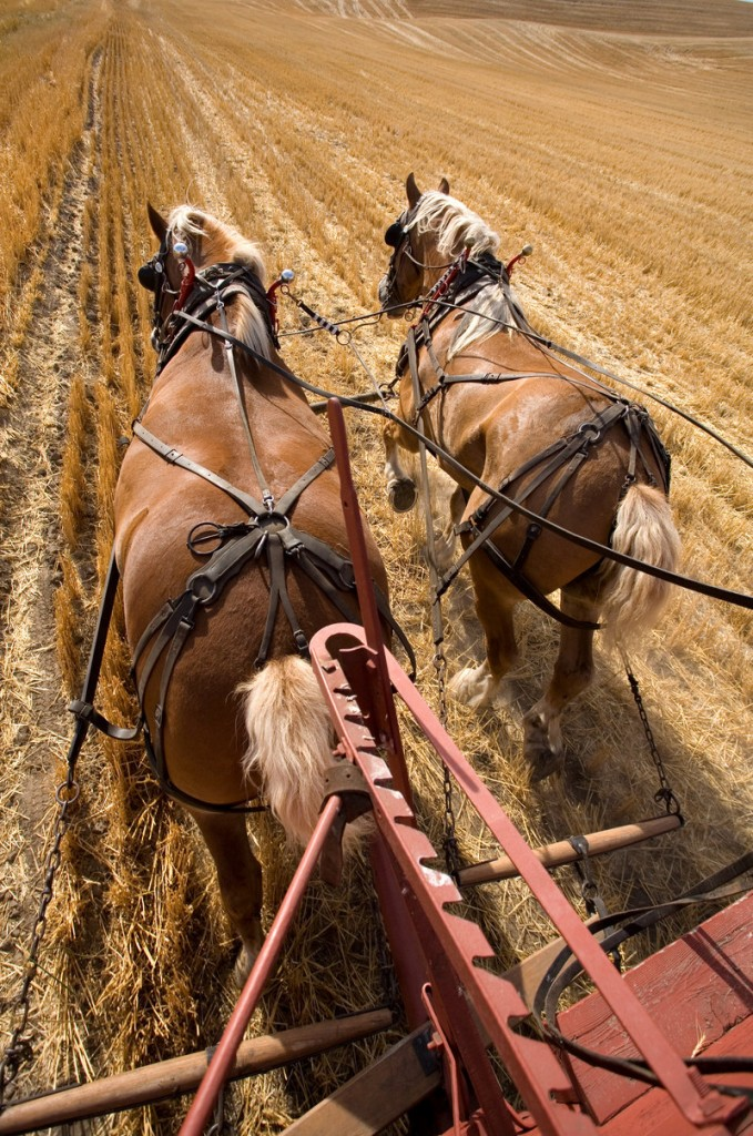 Draft horses, wagon rides and the Carriage Museum are among the attractions at the annual Plow Day on Saturday at Skyline Farm in North Yarmouth.