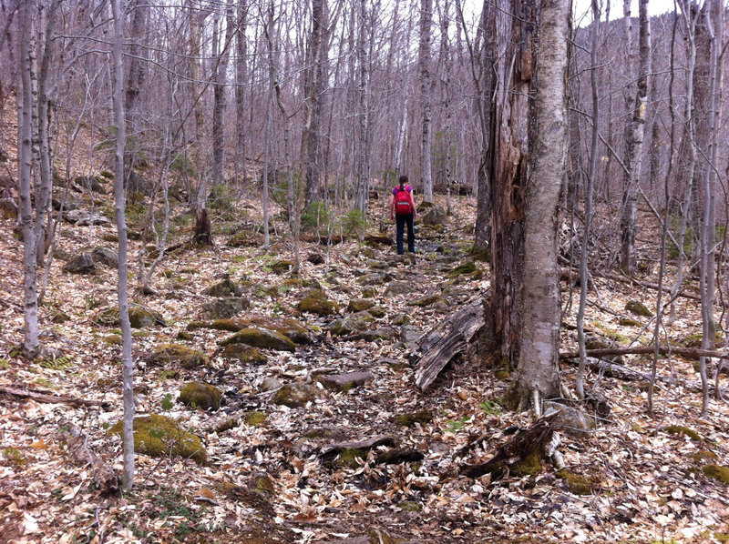 A large portion of the Mud Brook and Caribou trails offers rocks and roots that require hikers to avoid twisting an ankle. It's not a big problem but can be tiring.