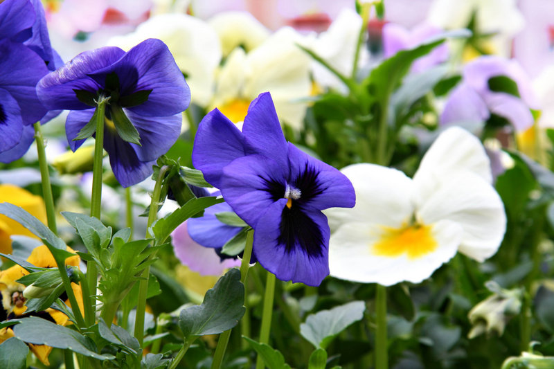 From Berwick to Thomaston and lots of locales in between, plant sales abound this weekend, with deals to be had on annuals, perennials, herbs and more.