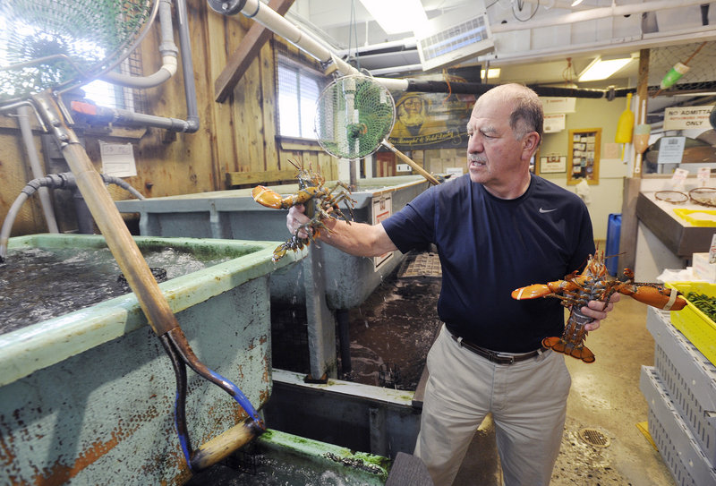 Nick Alfiero of Harbor Fish Market in Portland, said Wednesday that the abundance of soft-shell lobster has little effect on his business.