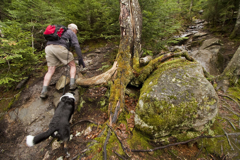 Bald Mountain consistently ranks as one of the top hikes in the state because of its views and its relatively short length of 1.3 miles.
