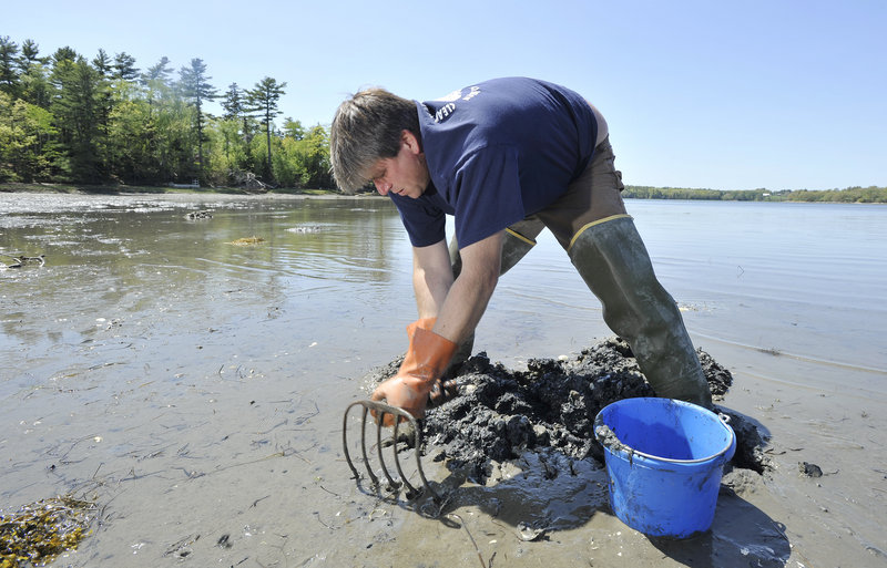 Freeport native Chad Coffin, who works as a clam digger, is concerned about the impact of increasing numbers of green crabs on the clam population.