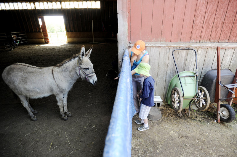 "Six-year-old Roe Mitchell-Clark of Saco peeks through a gate to see Chalupa, a donkey, at Bush Brook Farm Sunday. ""I have never seen a real donkey with hooves before!"" he exclaimed."
