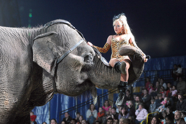 "Picadilly Circus' ""Blast!"", featuring animals, acrobats, aerialists and more, sets up its big top at the Topsham Fairgrounds from Wednesday to June 10."