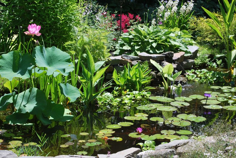 The Seacoast Water Garden Club's annual tour of water gardens in Maine and New Hampshire draws many people who are considering creating one of their own, organizers say. Proceeds from the tour will benefit the Center for Wildlife in Cape Neddick. But if you're not a fan of water features, don't despair: Many other tours this summer focus on traditional gardens.