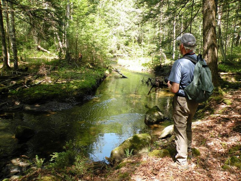 The Sheepscot Headwaters Trail Network is a 15-mile system of public hiking trails that lead through pleasant forests and open fields along winding streams and pretty marshes.