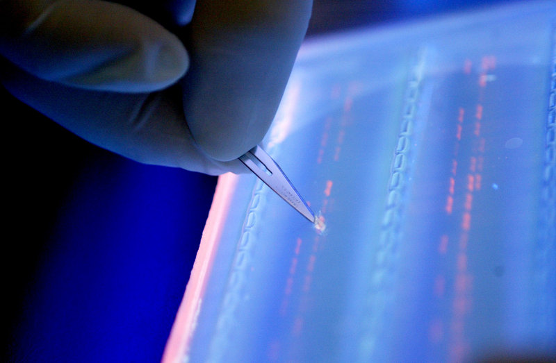 A lab officer cuts a DNA fragment under UV light from an agarose gel for DNA sequencing as part of research to determine genetic mutation in a blood cancer patient.