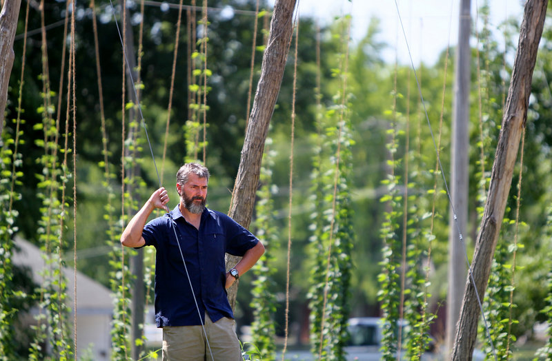 "Matt McCarroll, a chemistry professor at Southern Illinois University, checks out his hops plants near Murphysboro, Ill. ""The real challenge is mildew and pests,"" he says."