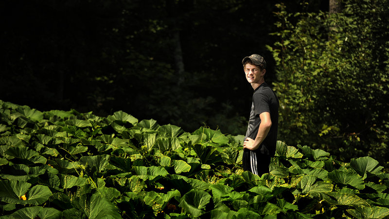 Lucas Dion hopes his giant pumpkin plant, seen here in his Waterboro backyard, will produce a prizewinner.