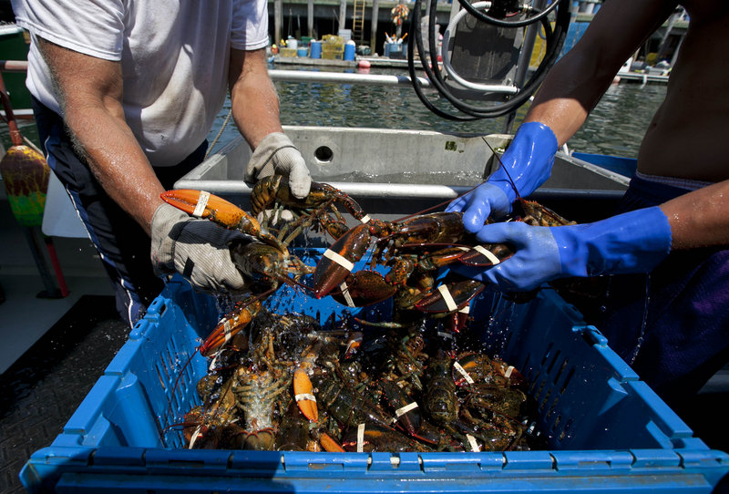 Lobsters are unloaded from a fishing boat in Portland last week.