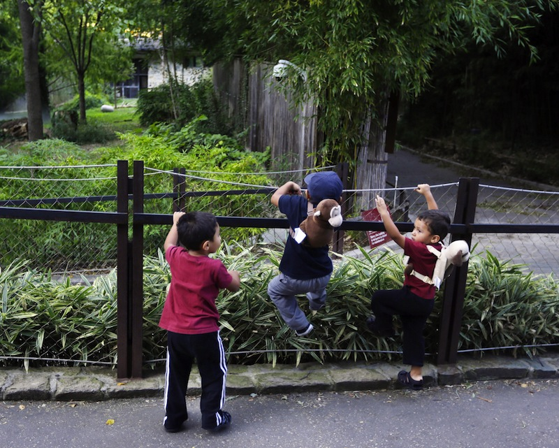 A trio of children climb and lean against the handrail of the closed Panda exhibit at the National Zoo in Washington the day after it was announced that the Zoo's female giant panda gave birth to a cub, Monday, Sept. 17, 2012, in Fairfax, Va. Mei Xiang gave birth Sunday at 10:46 pm, but the zoo staff has yet to see the new cub because Mei Xiang has built a large nest in her den. (AP Photo/Pablo Martinez Monsivais)